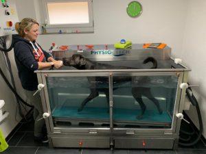 Physio für den Hund