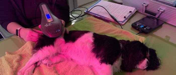 Hundephysiotherapie mit Laser-Frequenz-Therapie